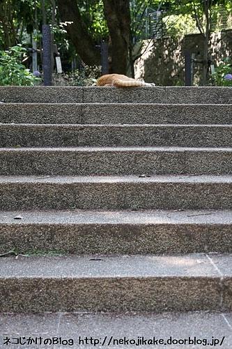 階段にネコがおんねん。