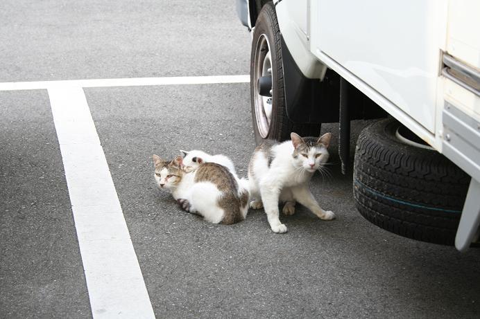 3匹のネコたち。