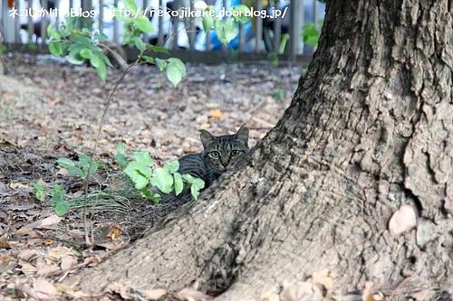 木の陰から見られてる。