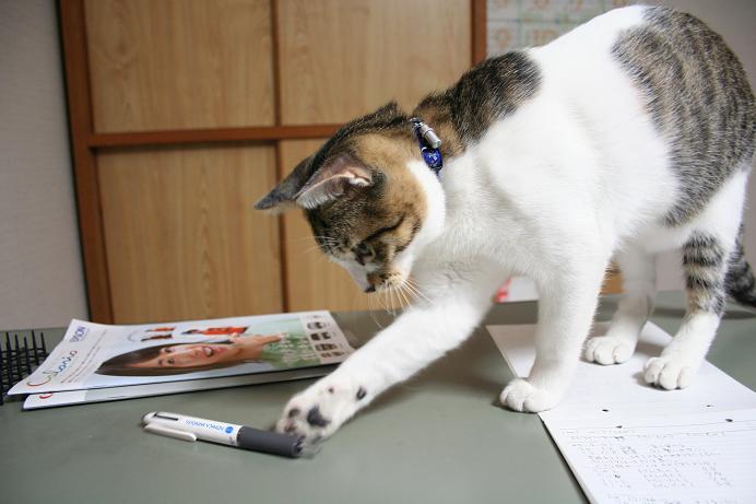 ペン大好き。シマ