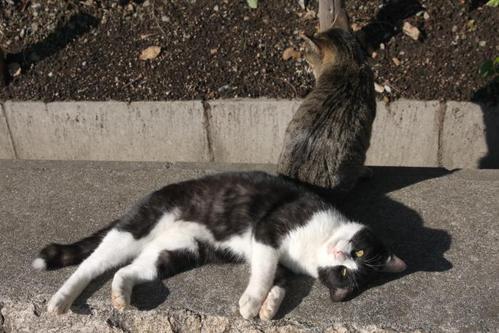 オーバと猫先輩。その2 オーバ 猫先輩