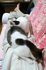 寝るねるネル。シマクロ
