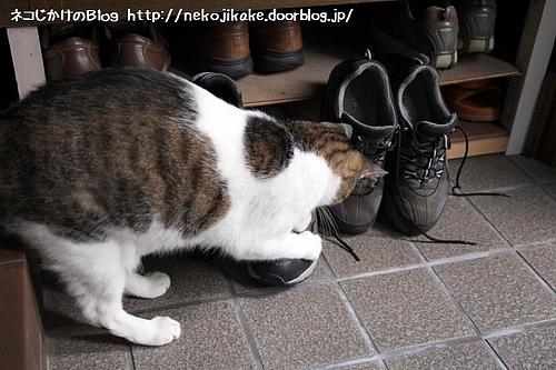 さて、今日の靴はどれにするかな。