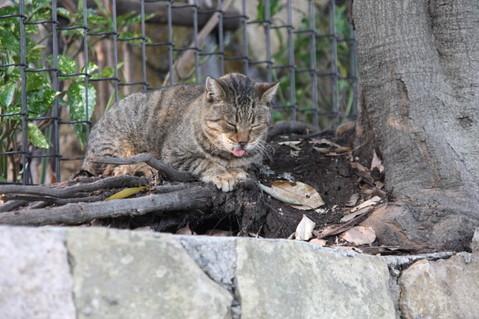 トラ(2009.10.31)