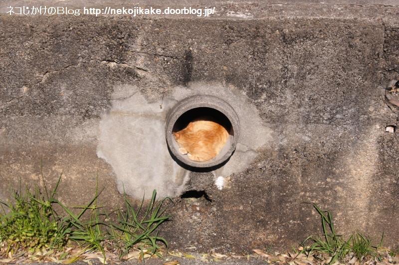 2017051804土管の中の猫。