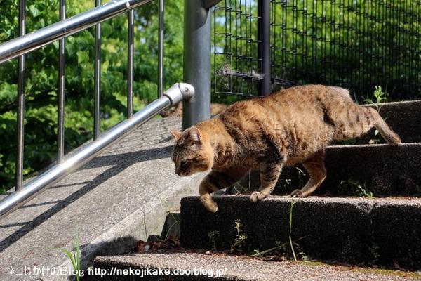 2016050504階段猫。2