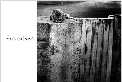 freedom展DM1