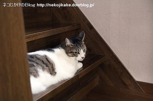 階段ネコ収納。
