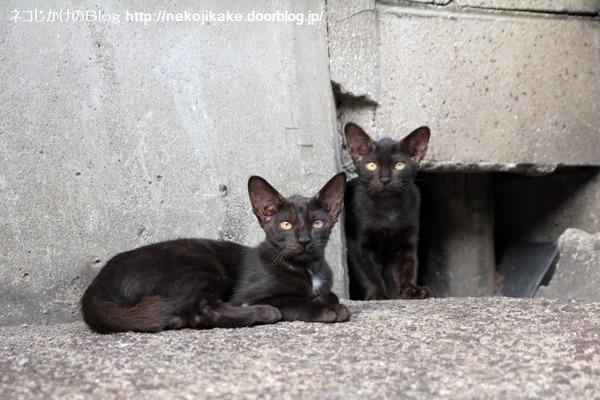2014083002黒ネコ二人。