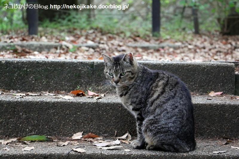 2015050704待ち猫。4