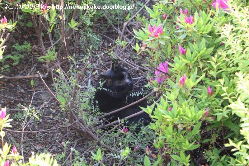 2019042013黒い猫。2