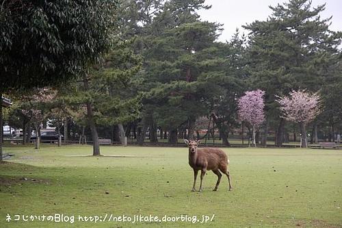 静かな公園に。