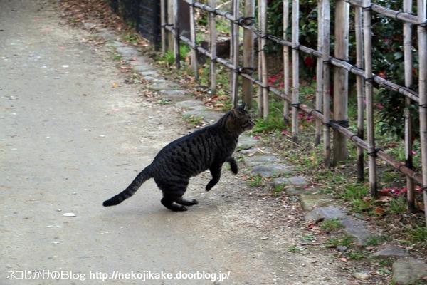 2017010114行く猫来る猫。3
