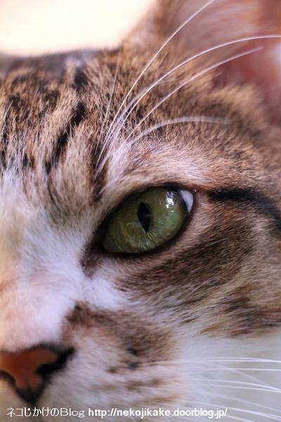 2016092302猫の顔。2