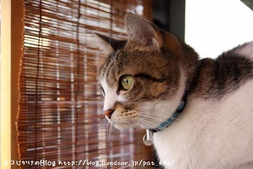 同じネコ。その2 シマ