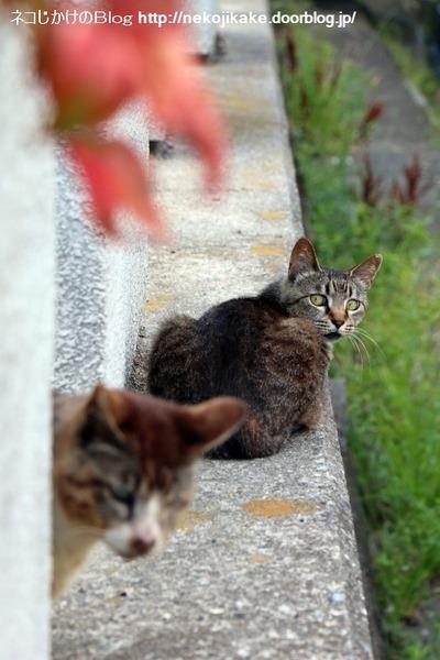 2016061404猫の見つめる先。2