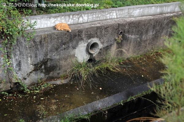 2014092506水の流れた跡。