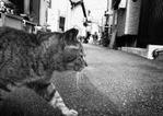 公開グループ展「町猫2011」DM