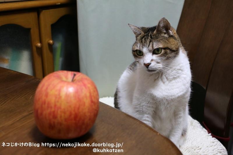 2021041506りんごの気持ちはよくわからない。