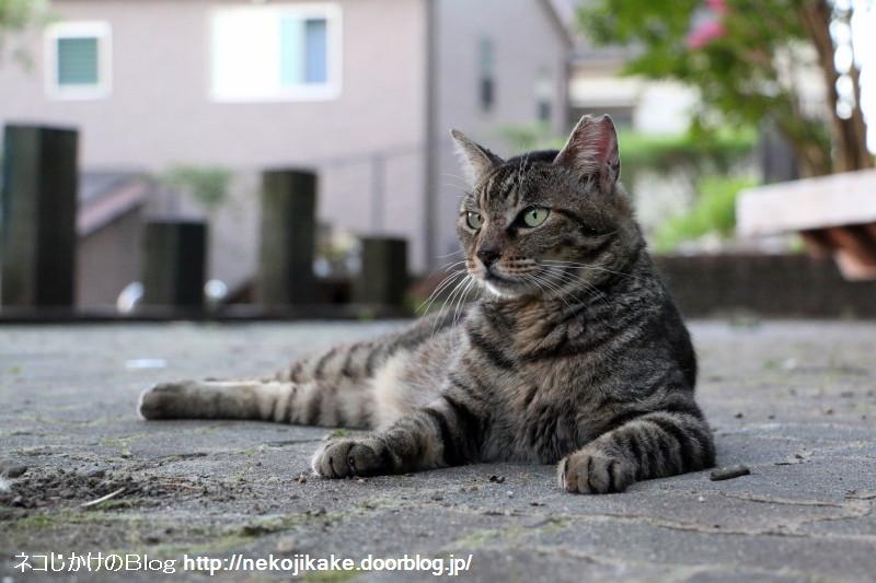2015071409納涼 外猫の場合。3