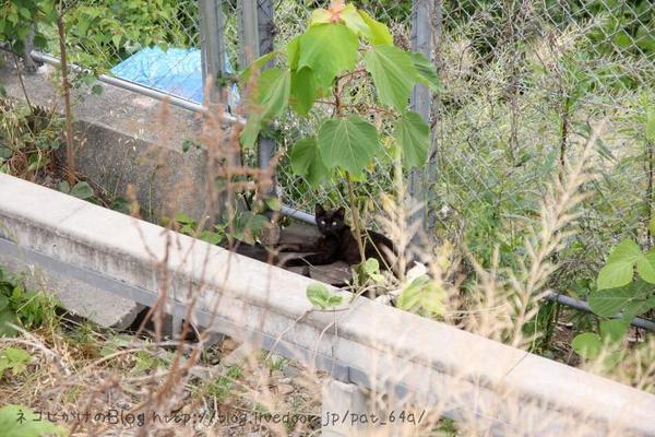 黒ネコさん。 黒ネコの子ネコ