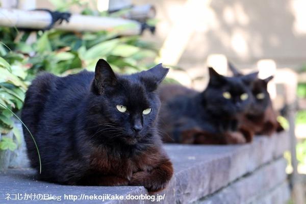 2016060110黒ネコ。1