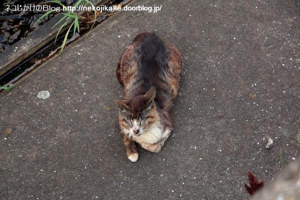 2016070608川沿いでくつろぐ猫たち。3