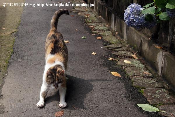 2016062213花に猫を添える。1