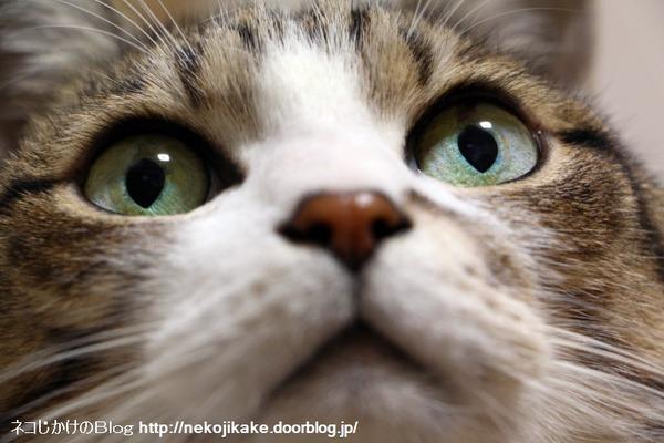2016112403猫の観察。3