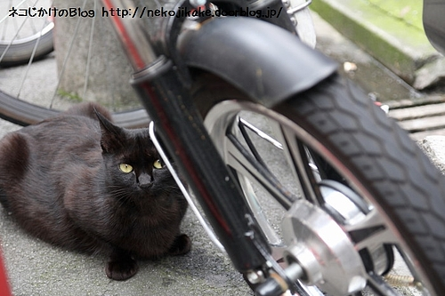 黒い自転車。