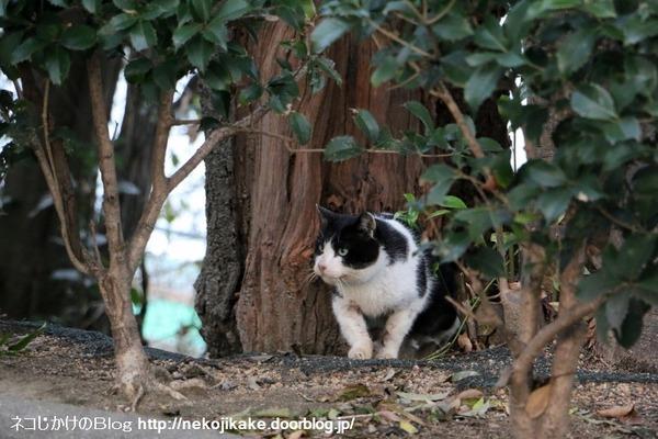 2015022705ネコってやつは4。