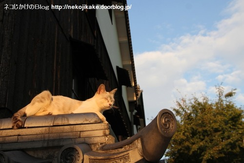 2013092301夕暮れのネコ。