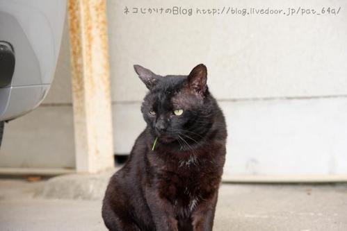 あっしには関わりねぇこって。黒ネコ
