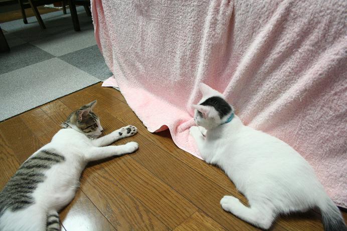 ネコ会議。