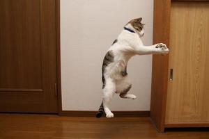 飛びます飛びます!シマ3
