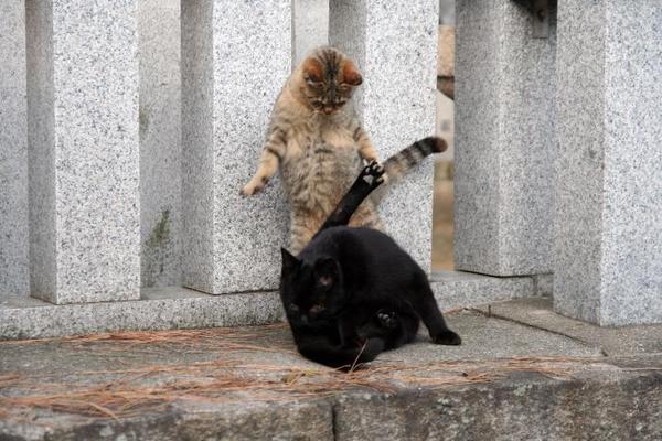 ちょっと通りますよ。その1 くーちゃん キジトラ子ネコ