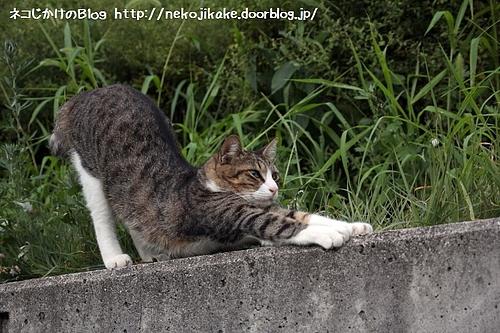猫のポーズの見本を見せます。