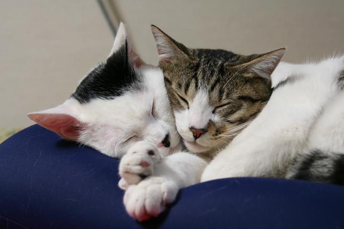 ぐっすりおやすみ。