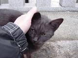 ネコと戯むる。