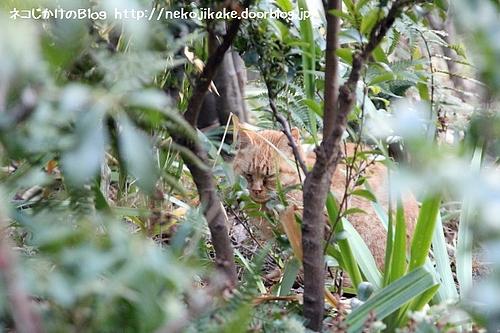 茂みの中に一人。