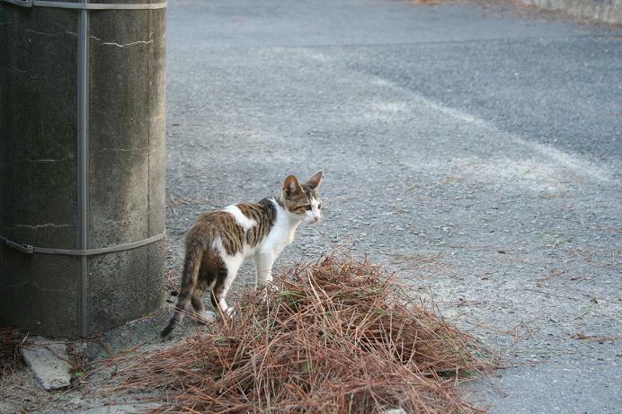 街の子ネコたち。神社