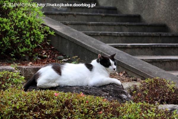 2016060915寝転んでナンボの猫の世界。7