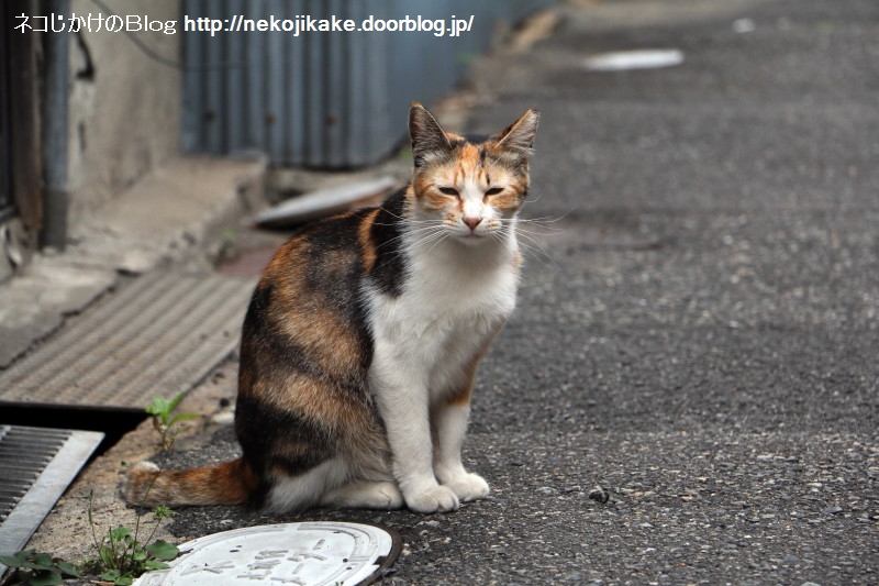 2018052804猫がいそうなところに猫がいた。