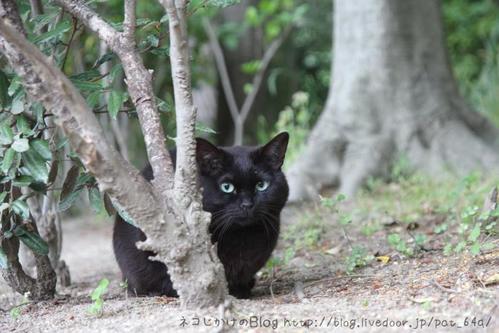目の色が変わる。その2 黒ネコ