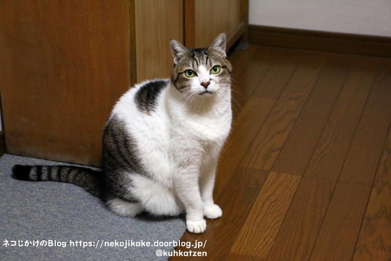 2020122602鳴いている猫が好きだ。2