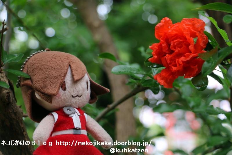 2020071304ザクロの赤い花。