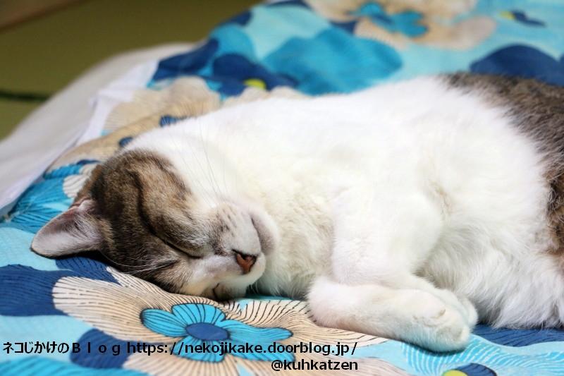 2020093005寝る猫を見て幸せな気分になる。1