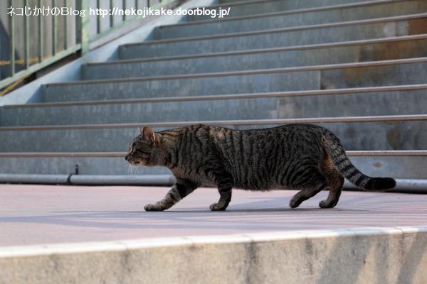 2016022603猫がいるだけで。1