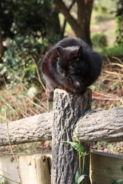 柵の上が好き。黒ネコ