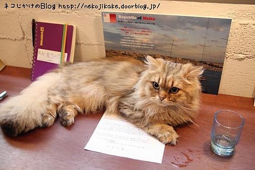 キャッテリアクラウドナインのネコ、羅門。